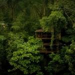 Finca Bellavista, Costa Rica - Foto: Allison Shelley