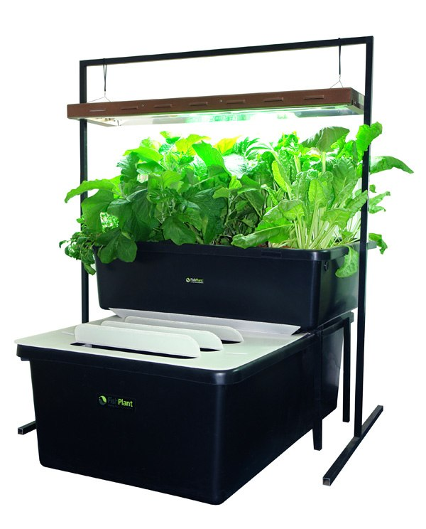 fishplant-family-unit