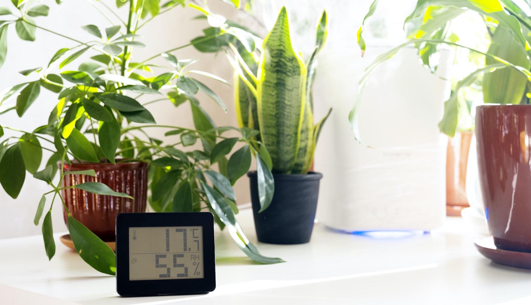 Hygrometer im Minihaus
