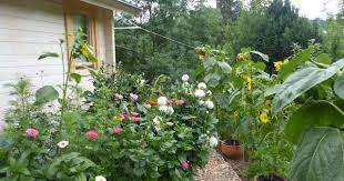Bild Ferienhäuschen Blumenmeer