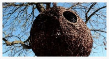 Weaver's Nest 2 Baumhaus (Photo)